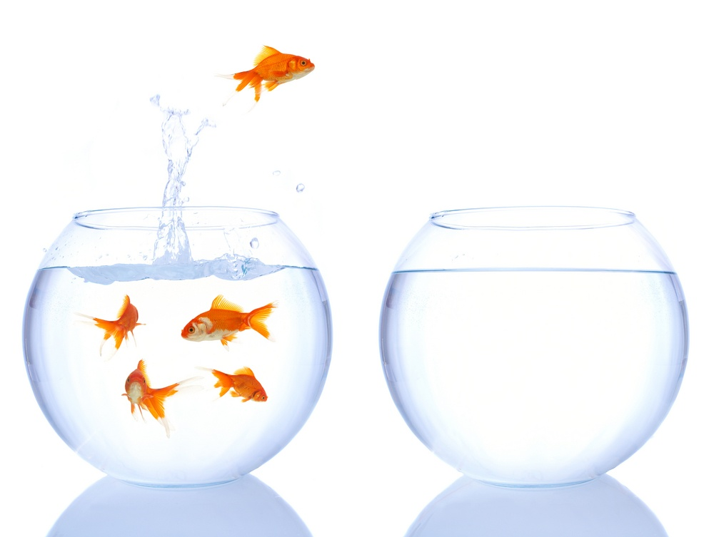 Goldfish-leaping-into-new-bowl-New-number.jpg